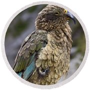 Round Beach Towel featuring the photograph Kea Bird by Sally Weigand