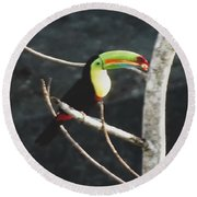 Keel-billed Toucan Round Beach Towel