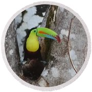 Keel-billed Toucan #2 Round Beach Towel