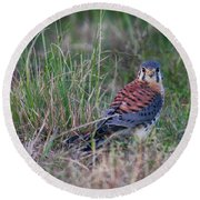 Kestrel  Round Beach Towel