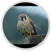 Round Beach Towel featuring the photograph Kestrel Hawk by Ann E Robson