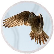 Round Beach Towel featuring the photograph Kestrel Hover by Mike Dawson
