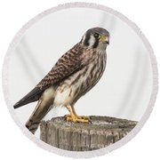 Round Beach Towel featuring the photograph Kestrel Portrait by Robert Frederick