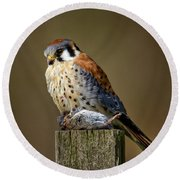 Kestrel With Prey Round Beach Towel