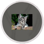 Round Beach Towel featuring the mixed media Ketten On The Fence by Charles Shoup