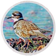 Killdeer  Round Beach Towel by Ken Everett