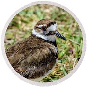 Killdeer Profile Round Beach Towel by Debra Martz