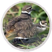 Killdeer With Chicks Round Beach Towel by Craig Strand