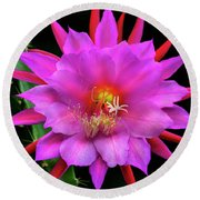 Kimnach's Pink Orchid Cactus Round Beach Towel