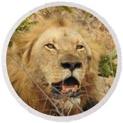 Round Beach Towel featuring the photograph King by Betty-Anne McDonald