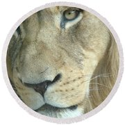 Round Beach Towel featuring the photograph King by Margaret Bobb