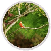 King Parrot Round Beach Towel by Cassandra Buckley