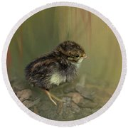 King Quail Chick Round Beach Towel