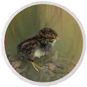 King Quail Chick Round Beach Towel