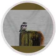 Kingfisher In Bellingham Round Beach Towel