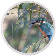 Kingfisher In Willow Round Beach Towel