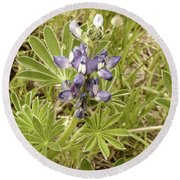 Round Beach Towel featuring the photograph Kings Park Wildflower by Cassandra Buckley