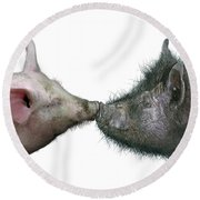 Kissing Pigs Round Beach Towel by James Larkin