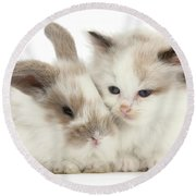 Kitten Cute Round Beach Towel