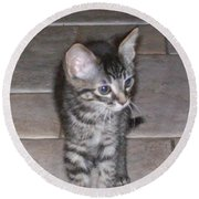 Martius Kitten Round Beach Towel