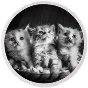 Kitten Trio Round Beach Towel