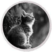 Kitten In The Tree Round Beach Towel