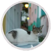 Kitten Reflections Round Beach Towel