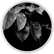 Round Beach Towel featuring the photograph Kiwi Leaves In Black And White by Ronda Broatch
