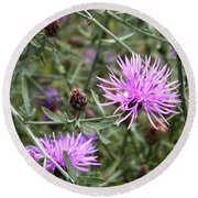 Knapweed Round Beach Towel
