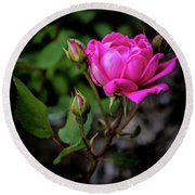 Knockout Rose Round Beach Towel