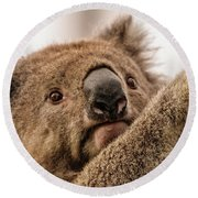 Koala 3 Round Beach Towel