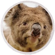 Koala 4 Round Beach Towel