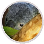 Koala Bear  Round Beach Towel by Anthony Jones