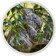 Koala Joey Round Beach Towel by Jamie Pham
