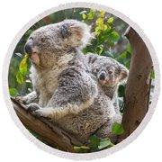 Koala Joey On Mom Round Beach Towel