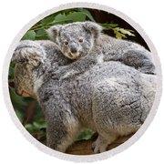 Koala Joey Piggy Back Round Beach Towel by Jamie Pham