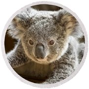 Koala Kid Round Beach Towel by Jamie Pham