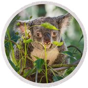Koala Leaves Round Beach Towel
