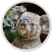 Koala Male Portrait Round Beach Towel by Jamie Pham