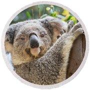Koala On Tree Round Beach Towel
