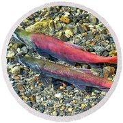 Round Beach Towel featuring the photograph Kokanee Salmon At Taylor Creek by David Lawson