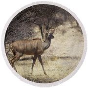 Round Beach Towel featuring the photograph Kudu Crossing by Ernie Echols