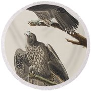Labrador Falcon Round Beach Towel by John James Audubon