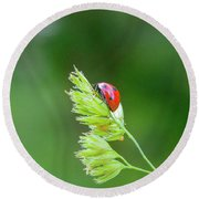 Lady Bird On A Herb Straw Close Up Round Beach Towel