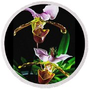 Lady Slipper Orchid Round Beach Towel by Elf Evans