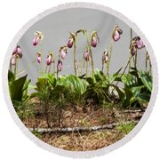 Lady Slippers Round Beach Towel by Daniel Hebard