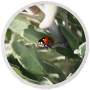 Ladybug And Sage Leaves Round Beach Towel by Carol Groenen