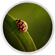 Ladybug  On Green Leaf Round Beach Towel