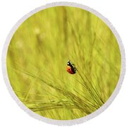Ladybug In A Wheat Field Round Beach Towel