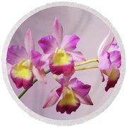 Laeliocatonia Hybrid Orchids V2 Round Beach Towel